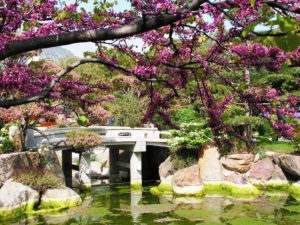 One of the gems of Rockford, IL: Anderson Japanese Gardens.