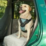 Bergen Brand Dog Car Harness