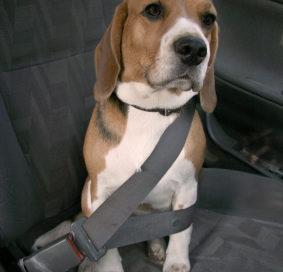 Pet travel safety tips | Auto Lab Libertyville